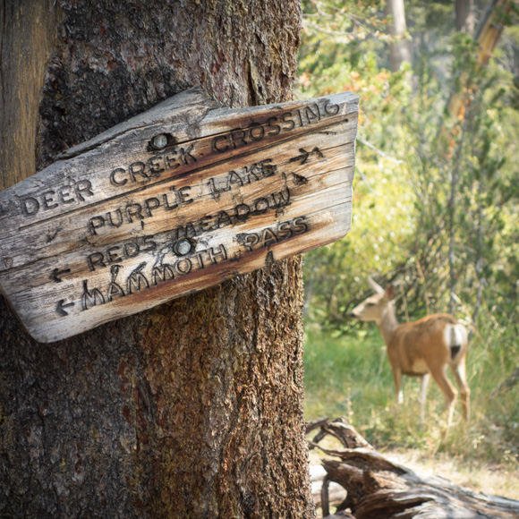 A double morale booster: a trail sign AND a wildlife sighting!